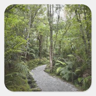 基盤の熱帯雨林を通した道の スクエアシール