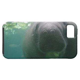 堅い薄く水っぽいマナティーのiPhone 5 Case-Mate iPhone 5 ケース