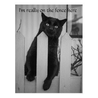 塀でつるしているおもしろいな猫 ポストカード