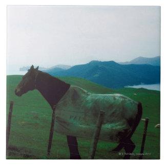 塀の後ろの馬 タイル