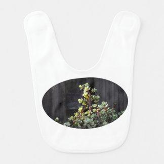 塀の植物に対するvarigated portulacaria ベビービブ