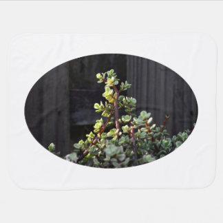 塀の植物に対するvarigated portulacaria ベビー ブランケット
