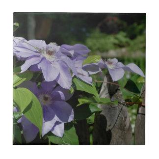 塀の自然のラベンダーのクレマチスの花 タイル