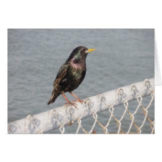 塀の鳥 カード