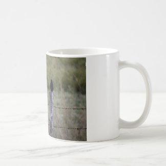 塀SUNIRD及びオウチュウ族田園オーストラリアの鳥 コーヒーマグカップ