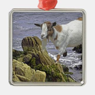 塩水のヤギの子供のファンタジー シルバーカラー正方形オーナメント