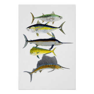塩水の釣魚の芸術ポスター ポスター