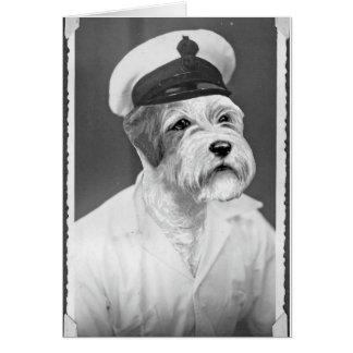 塩辛い海犬のSealyhamの船員のギフト カード