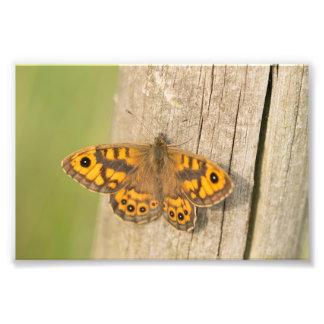壁のブラウンの蝶 フォトプリント