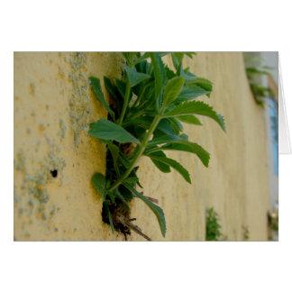 壁の植物 カード