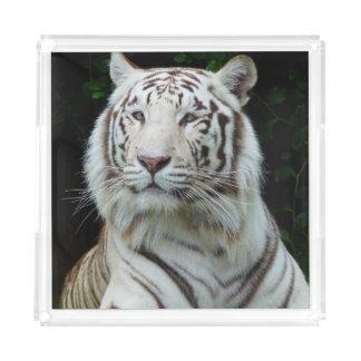 壮大で白いトラ アクリルトレー
