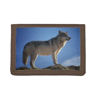壮大なオオカミ