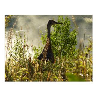壮大なTetonのアメリカヘラジカの池のSandhillクレーン ポストカード