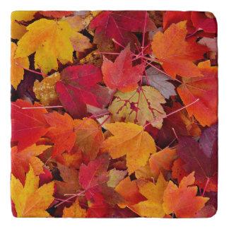 壮麗なかえでの葉 トリベット