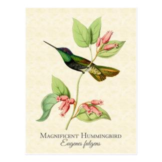 壮麗なハチドリのヴィンテージの芸術 ポストカード