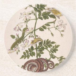 変態のinsectorum Surinamensium コースター