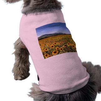 夏のヒマワリの景色 ペット服
