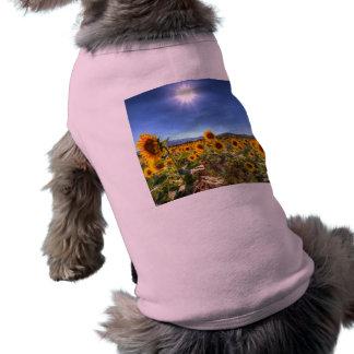 夏のヒマワリ分野 ペット服