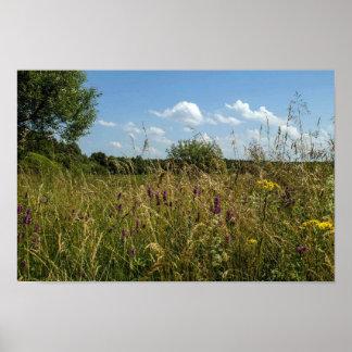 夏の分野および野生の花 ポスター