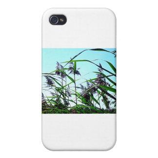 夏の干し草 iPhone 4 CASE