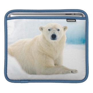 夏の氷の大人の白くまの大きい雄豚 iPadスリーブ