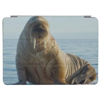 夏の海氷のセイウチの残り iPad AIR カバー