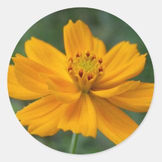 夏の花- calendula ラウンドシール