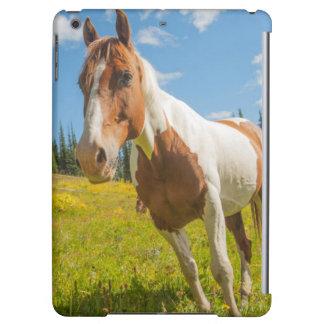 夏の高山草原の好奇心が強い馬