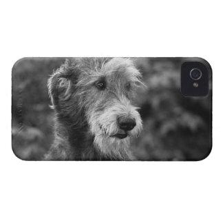 外で犬 Case-Mate iPhone 4 ケース