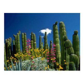 多くの植物、Sonoranの砂漠、アリゾナの花を飾って下さい ポストカード