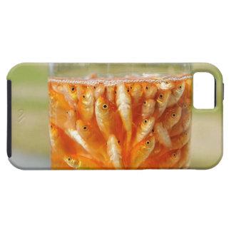 多くの金魚ガラス容器にある iPhone SE/5/5s ケース
