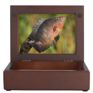 多彩な魚を表示しているanhinga ジュエリーボックス