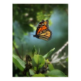 多忙な(昆虫)オオカバマダラ、モナーク ポストカード
