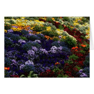 多色刷りの花カード カード