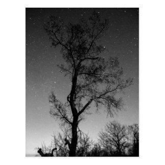 夜の白黒木 ポストカード