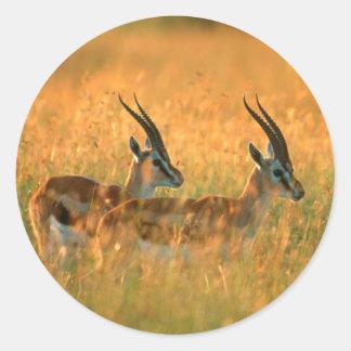 夜明けにトムソンのガゼル(Gazella Thomsonii) ラウンドシール