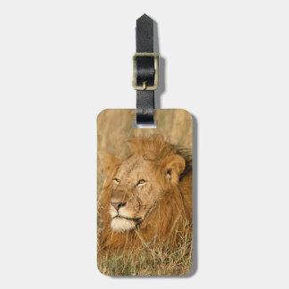 夜明けの成人男子のライオン ラゲッジタグ
