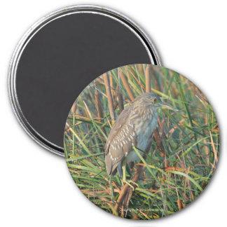 夜鷲の磁石 マグネット