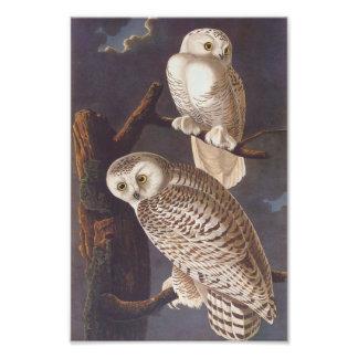 夜Audubonのヴィンテージの芸術のSnowy白のフクロウ フォトプリント