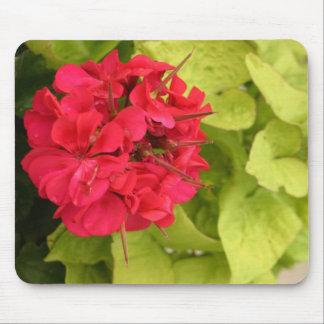 大きいピンクのゼラニウムの花の花は写真を閉めます マウスパッド