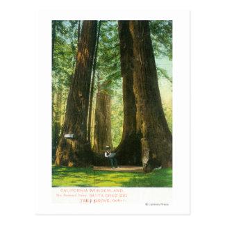 大きい木果樹園のレッドウッドの双生児の眺め ポストカード