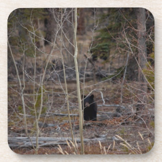 大きい森林の少しくま コースター