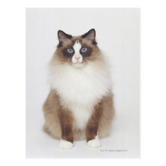大きい毛皮で覆われた猫 ポストカード