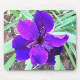 大きい紫色のアイリス マウスパッド