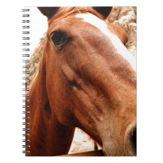 大きい鼻 ノートブック