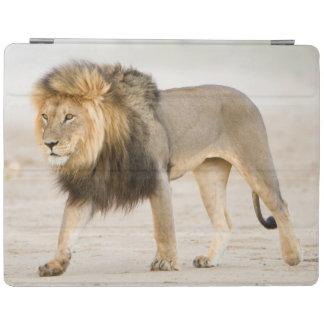 大きく黒いManedライオン(ヒョウ属レオ)の歩行 iPadスマートカバー