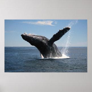 大人にザトウクジラの破ること ポスター