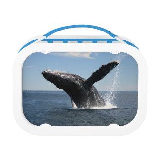 大人にザトウクジラの破ること ランチボックス