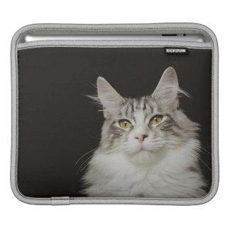 大人のメインのあらいぐま猫 iPadスリーブ