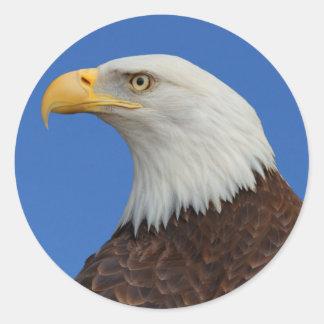 大人の白頭鷲のプロフィール ラウンドシール
